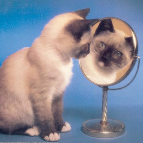 Dara O Shayda's avatar