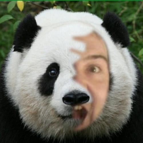 thepanda-1's avatar