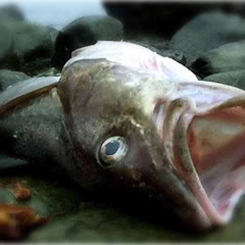 deadfishfaces's avatar