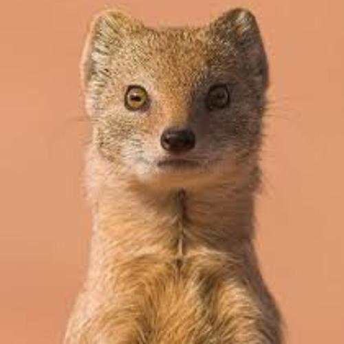 i am weazle's avatar