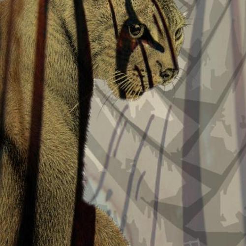 persian mynx's avatar