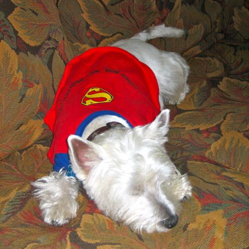 jackdog1997's avatar