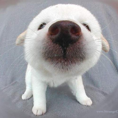 SOUNdbEAST's avatar