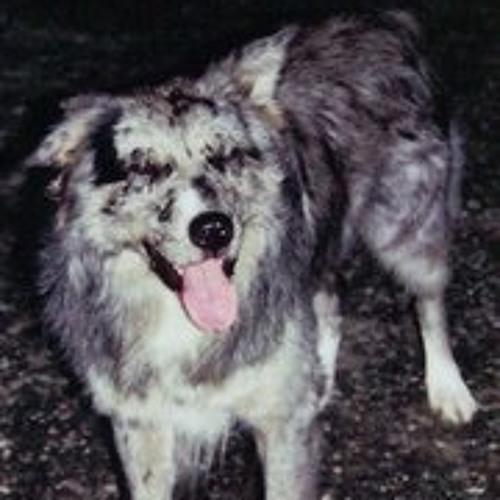 meikel-kreuchauf's avatar