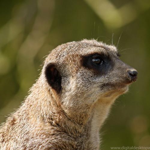 Cotera's avatar