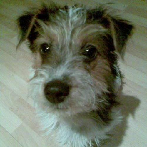 Tillybean - damn dog!'s avatar