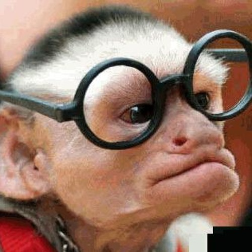 monkey8's avatar