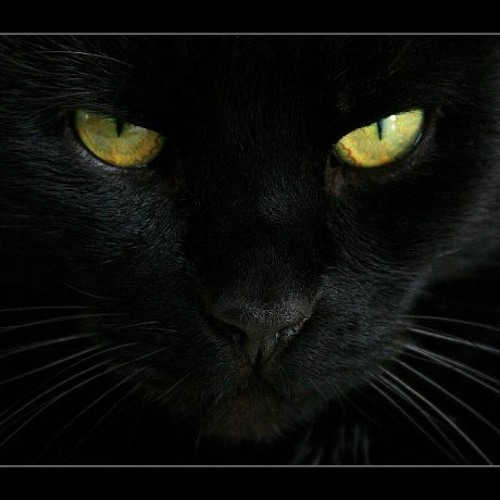 carlos000's avatar