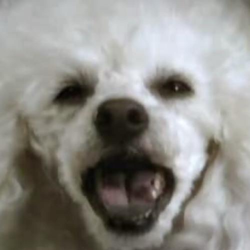 Dabolo's avatar