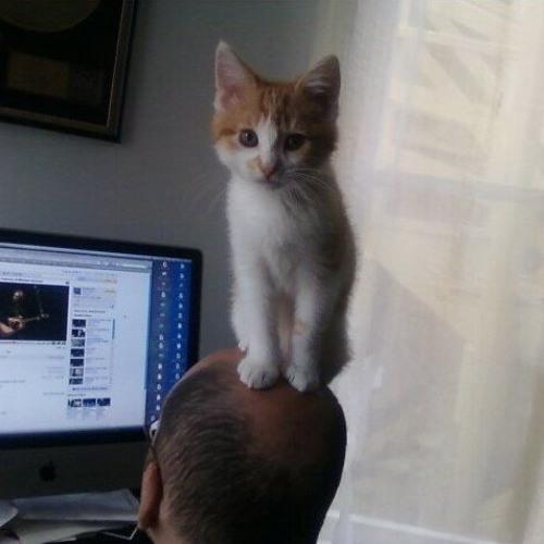 kittencharmer's avatar