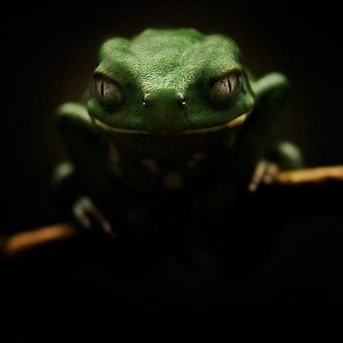 MaxRuleZz's avatar