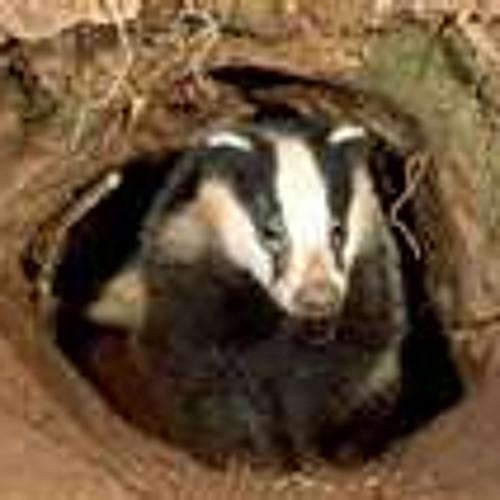 Badger's Allstars's avatar