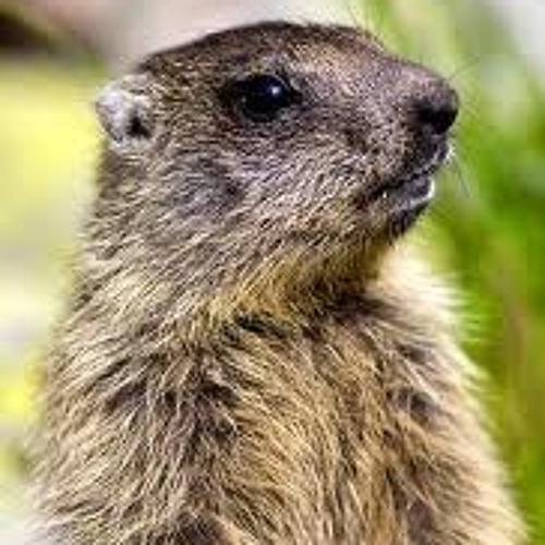 Dj Marmotta vogliosa's avatar
