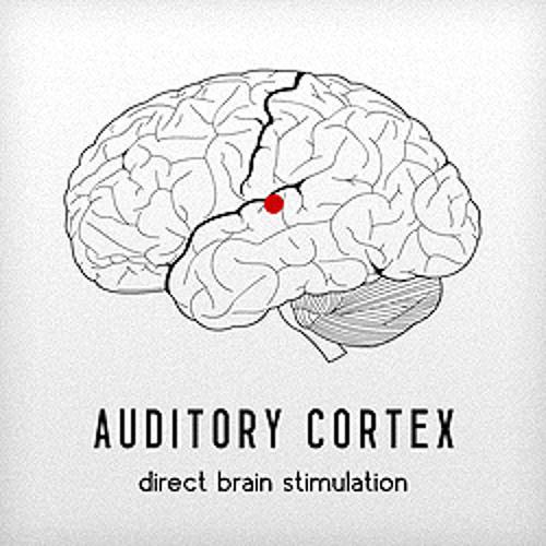 Auditory Cortex's avatar