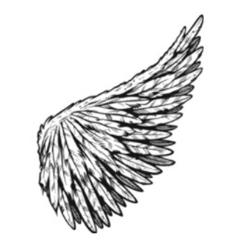 lil_wings's avatar