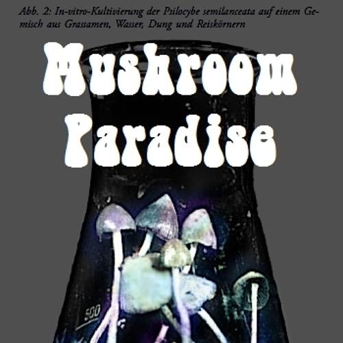 Mushroom Paradise's avatar