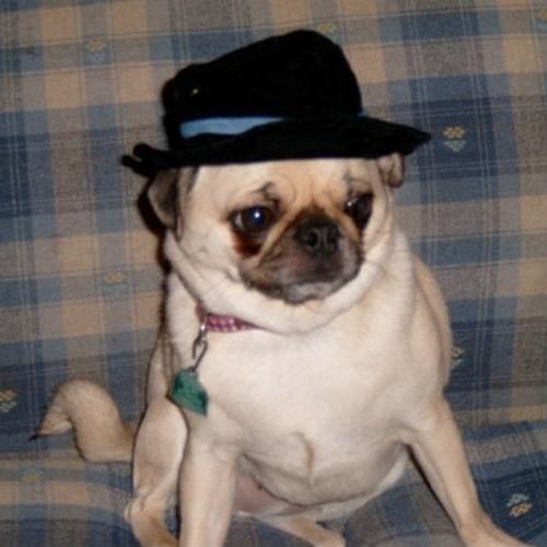 dogtown's avatar