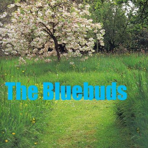 the bluebuds's avatar