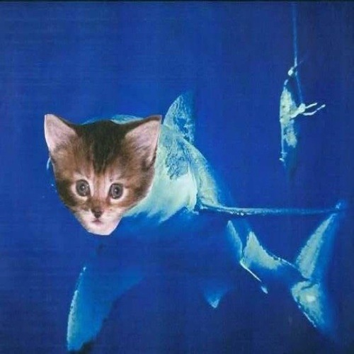 catshark's avatar