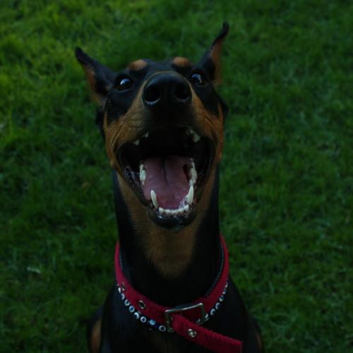 honds's avatar