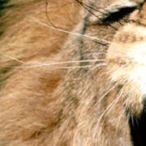 basslion-studio's avatar