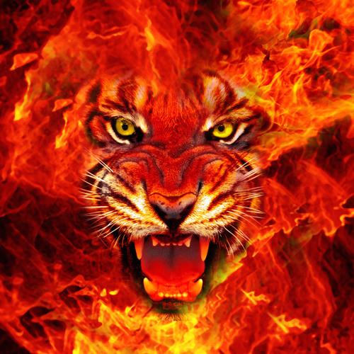 davicee's avatar