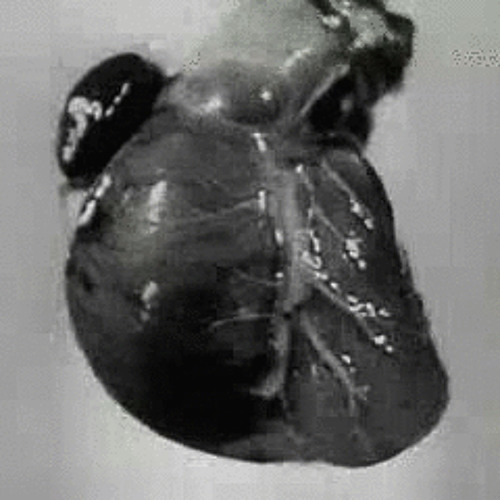 HEART-ON's avatar