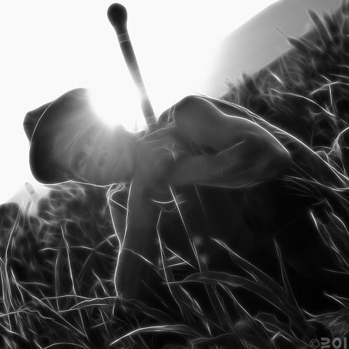 natty-warrior's avatar