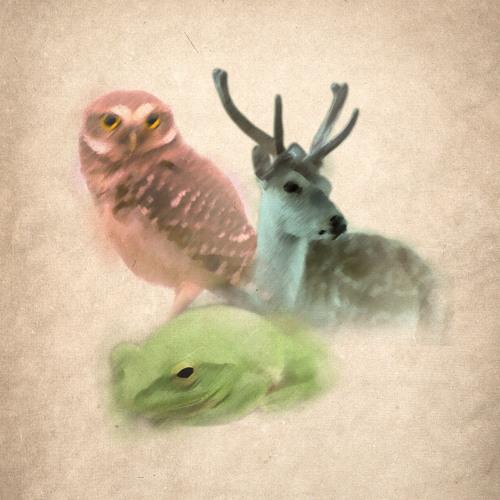 AsNarrow records's avatar