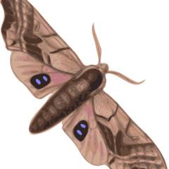 Lt. Moth