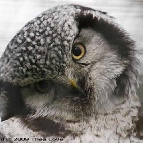 OwlCat's avatar