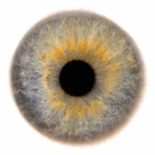Zeusmoir's avatar