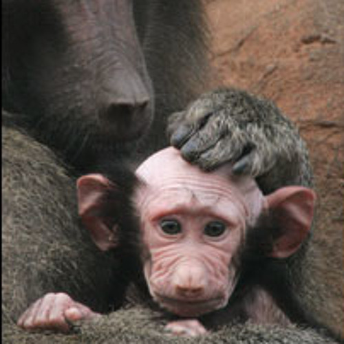 baboonbaby's avatar