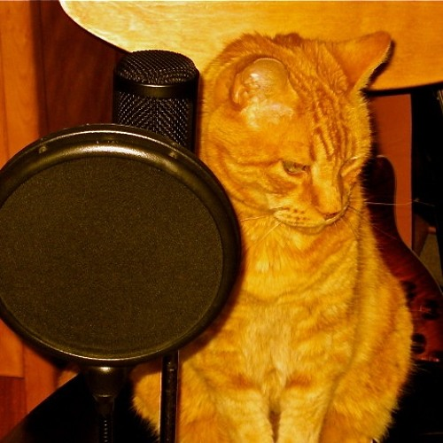 Big Orange Cat Sound's avatar