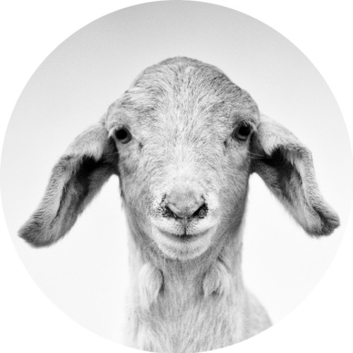 a-a-s's avatar