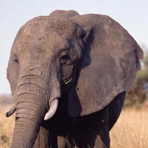 Elephant Noise's avatar