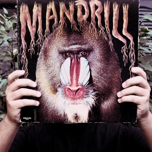 DJ Primate's avatar