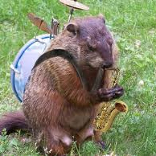 Peter harp's avatar