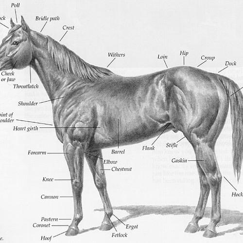 Wild Horsey Ride's avatar