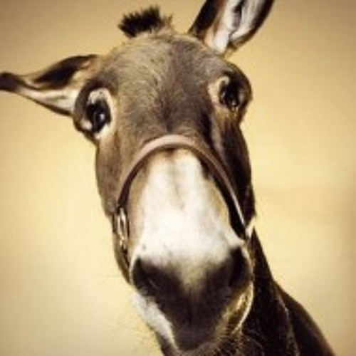 Donkihoof's avatar