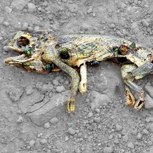 Dead Lizard's avatar