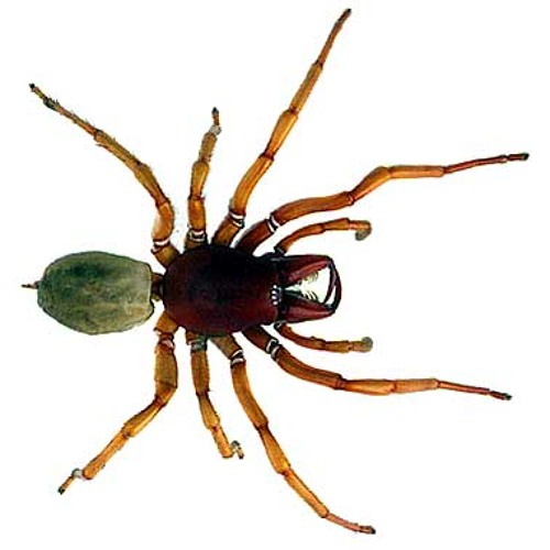 spider eua's avatar