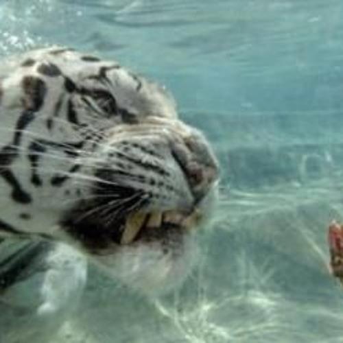 zoo eua's avatar