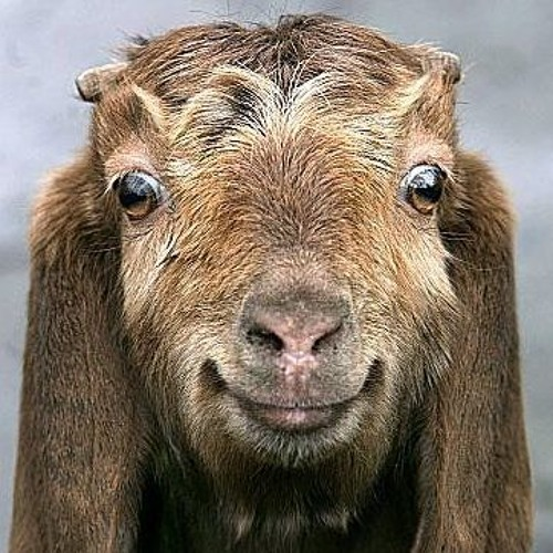 Happy Goat's avatar