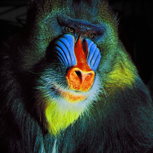 bluemonkeysoundscape's avatar