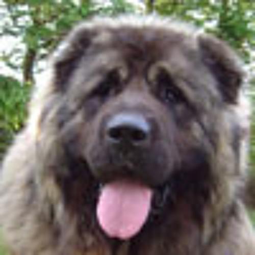 mherrera006's avatar