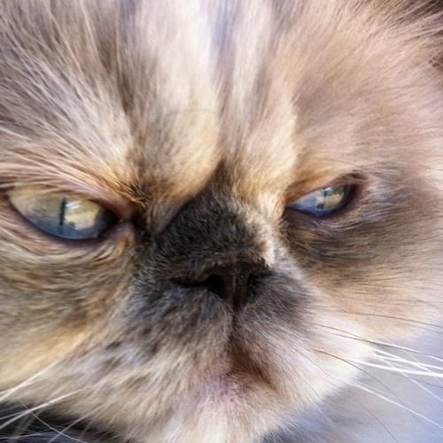Massima's avatar