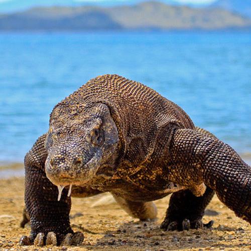 Komodo Sound's avatar