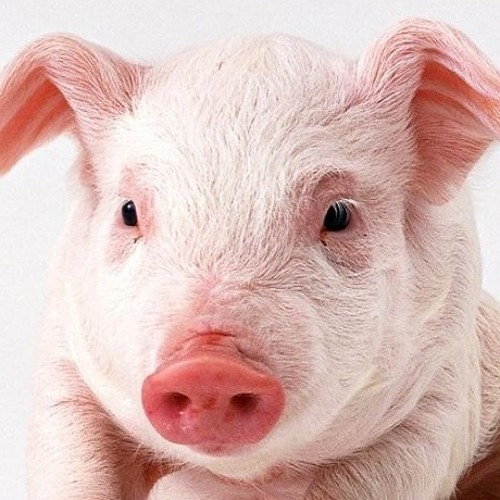 Pignes's avatar