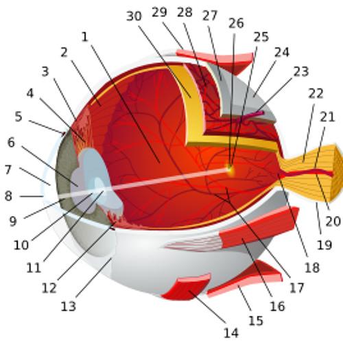 Eyezeit's avatar